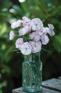 Picotee Carnation Crimson Rim Vase_TMHF-4