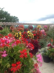 Last year's trials were our most colourful ever!