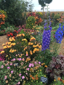 Potted Cottage Gardens!