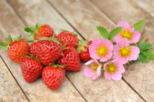strawberry-just-add-cream_tmhf-13