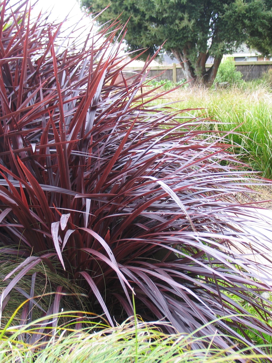 Using the right plants to make gardening easier for for Low maintenance grass plants